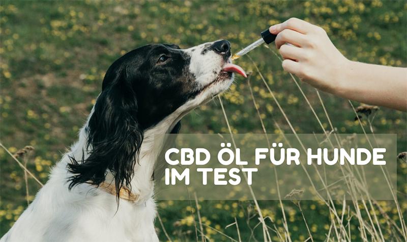 CBD ÖL FÜR HUNDE IM TEST
